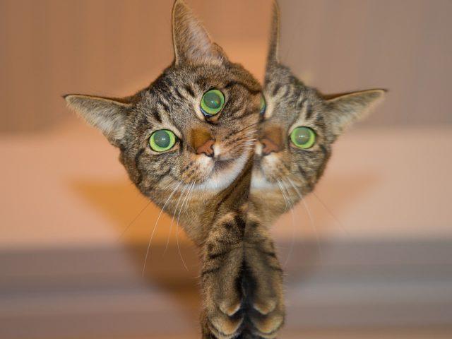 Jak zaaplikować kotu tabletkę?